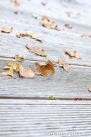 De herfstbladeren