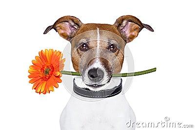 De hond van de bloem