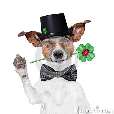 De hond van de schoorsteenveger