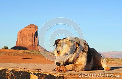 De hond van het park
