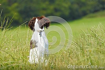 De hondzitting van het puppy geduldig