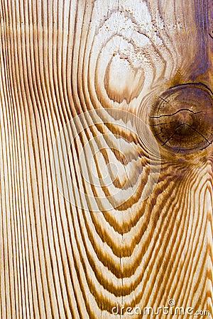 De houten korrel van de ceder