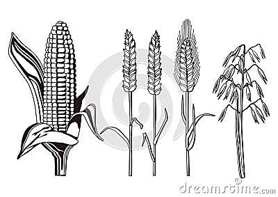 De illustratie van graangewassen
