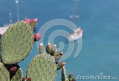 De installatie van de cactus bij Franse riviera