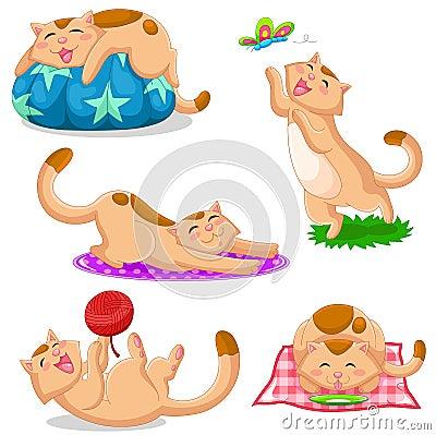 De inzameling van katten