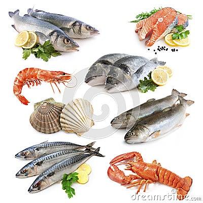 De inzameling van vissen