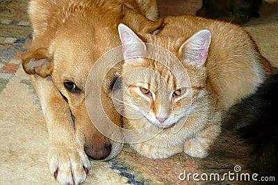 De kat en de hond van het huisdier