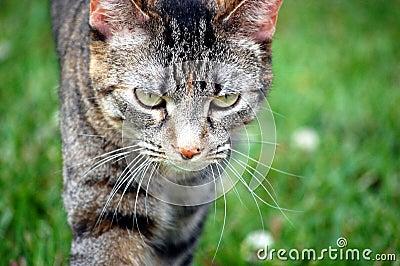 De kat op snuffelt rond