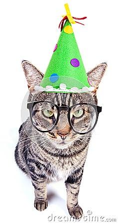 De kat van de partij