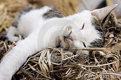De kat van de slaap