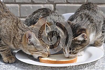 De katten eten