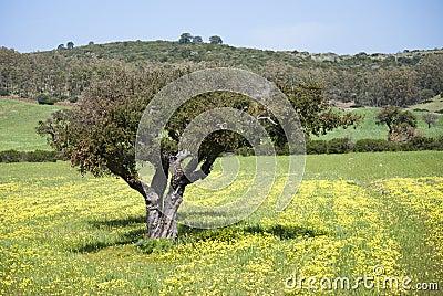 De kleuren van de lente in Sardinige