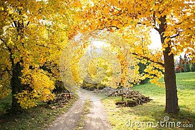 De kleurrijke herfst