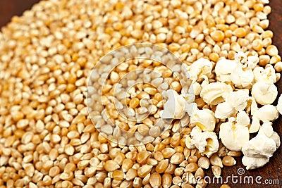 De korrel van de popcorn en van het graan