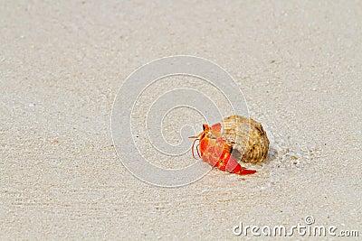 De krab die van de kluizenaar naar het overzees loopt