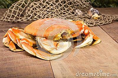 De krab van Dungeness klaar te koken