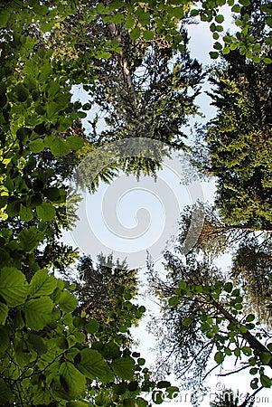 De kroonframe van de boom