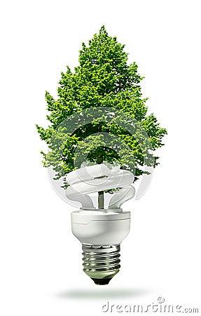 De lamp en de boom van Eco