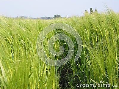 De landbouw