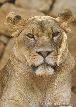 De leeuwin ziet eruit