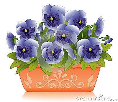 De lente Pansies