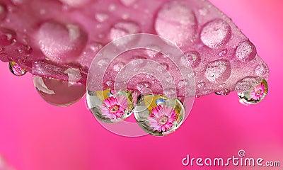 De macro bloem van de waterdaling