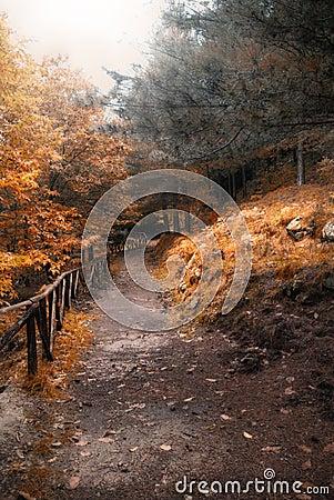 De manier van de herfst