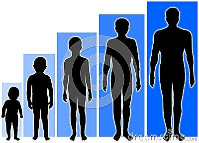 De mannelijke groei