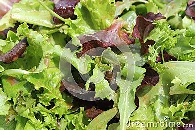 De mengeling van de salade