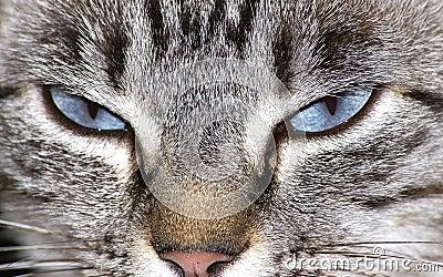 De ogen van de kat