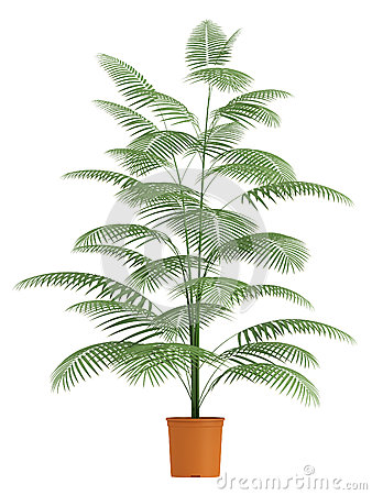 De palm van Chamaedorea in container