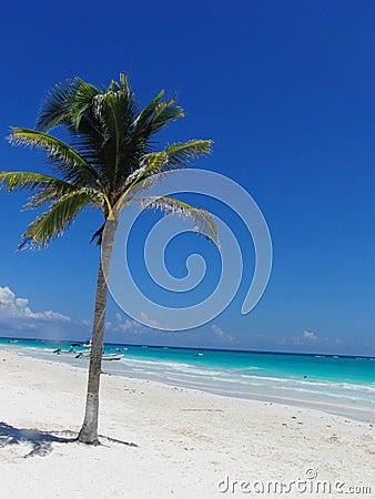 De Palm van het paradijs