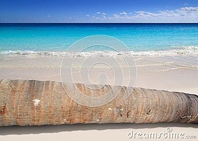 De palmboomstam die van de kokosnoot op turkoois strand ligt