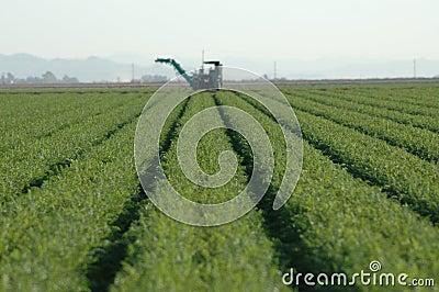 De Rijen van het gewas en Landbouwwerktuig