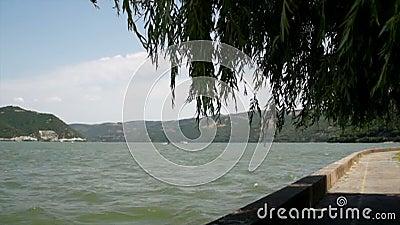 De Rivier en Willow Tree With Wind Blowing van Donau wild stock video