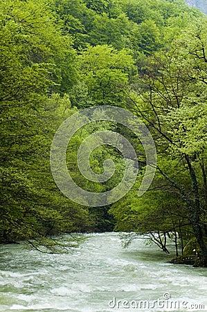 De Rivier van Cerna in Roemenië