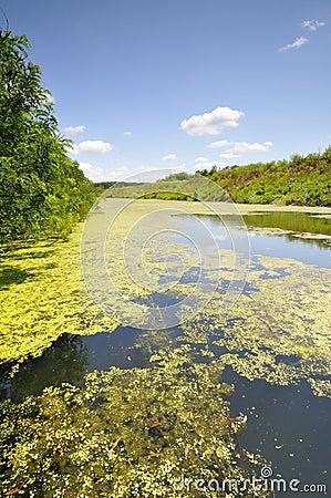 Rivier die in zomerstromen door de vlakte