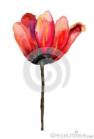 De rode bloemen van de Tulp