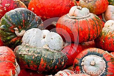 De Rode Tulband van de pompoen
