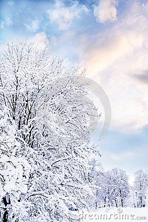 De romantische winter