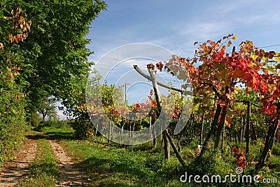 De route van de wijngaard