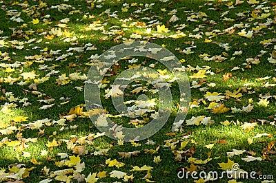 Zonschaduw en bladeren