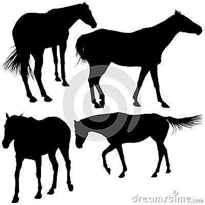 De Silhouetten van paarden