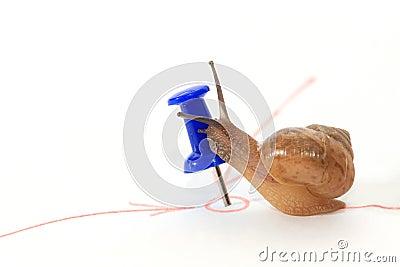 De slak die het doel bereiken en kust het doel.
