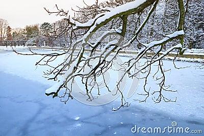 De sneeuw winter in het park