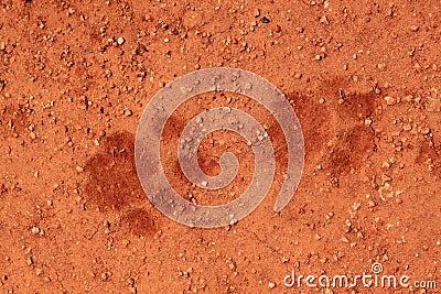 De sporen van de leeuw in het zand