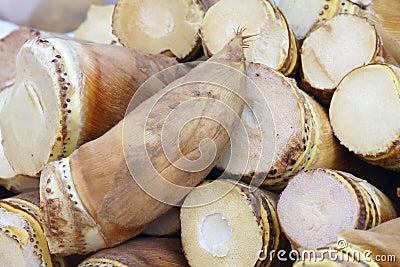 De spruiten van het bamboe