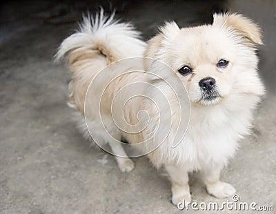 De staart van het puppy omhoog