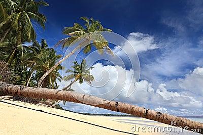 De stam van de palm op tropisch paradijsstrand