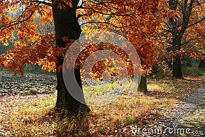 De steeg van de herfst